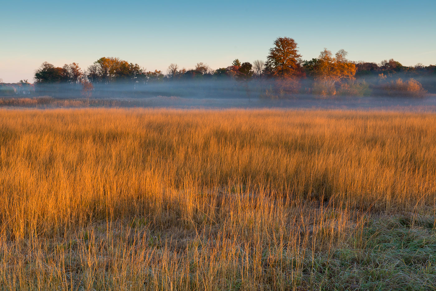 Grasses and fog, Carlos Avery State Wildlife Area, Minnesota