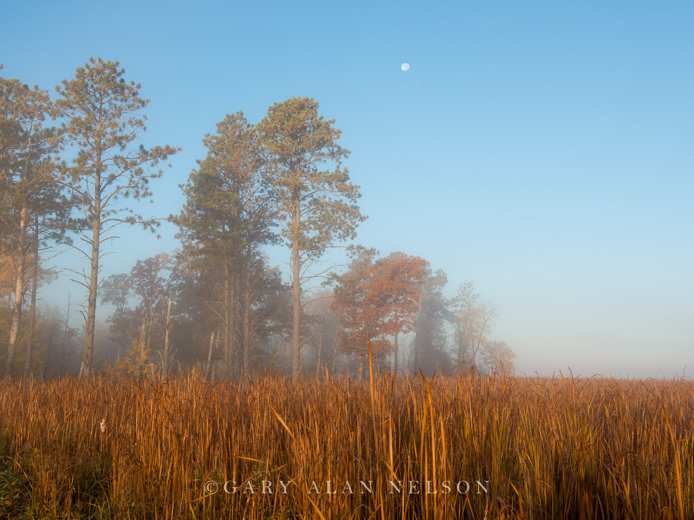 cattail marsh, fog, minnesota, carlos avery, photo