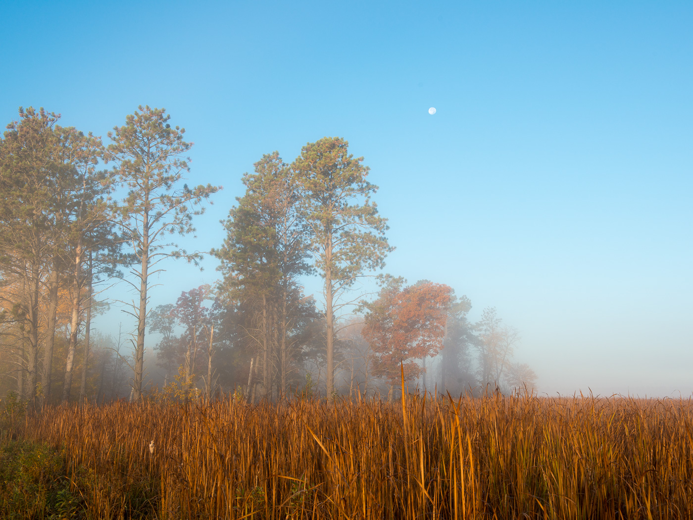 Fog and full moon over cattail marsh, Carlos Avery State Wildlife Management Area, Minnesota