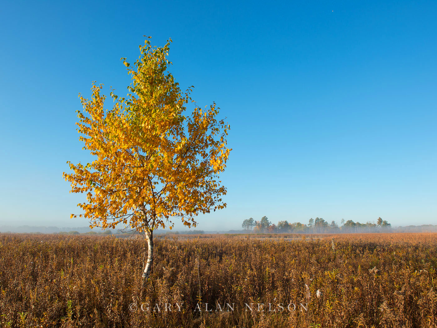 prairie, birch, minnesota, carlos avery, wildlife area, photo