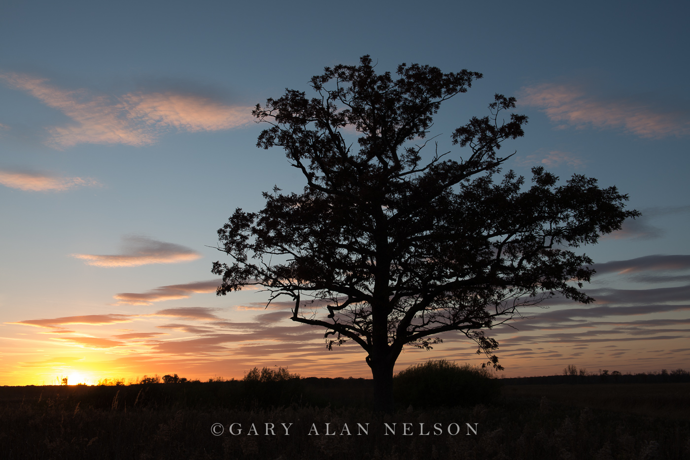 oak, silhouette, carlos avery, wildlife area, minnesota, photo