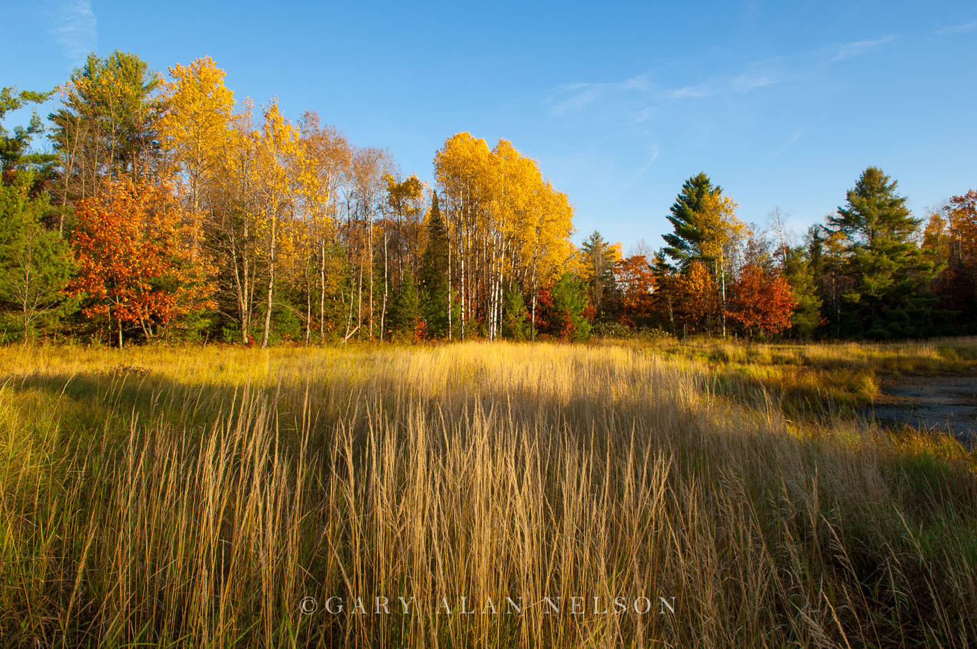 grasses, autumn, minnesota, chippewa national forest, photo
