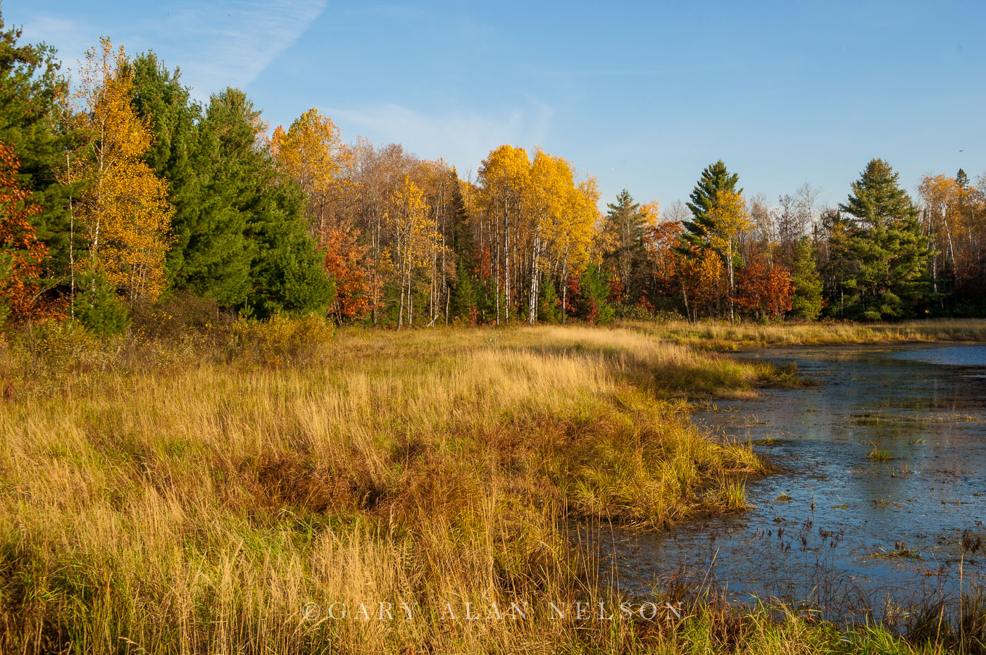 minnesota, chippewa national forest, autumn, photo