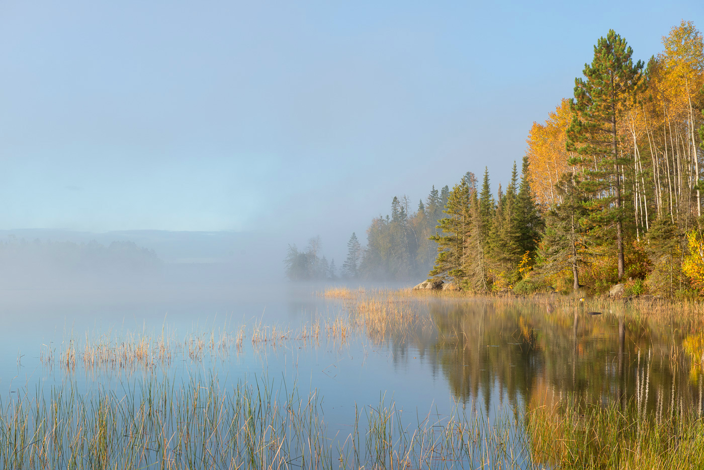 Fog and autumn on the shore of Birch Lake, Superior National Forest, Minnesota