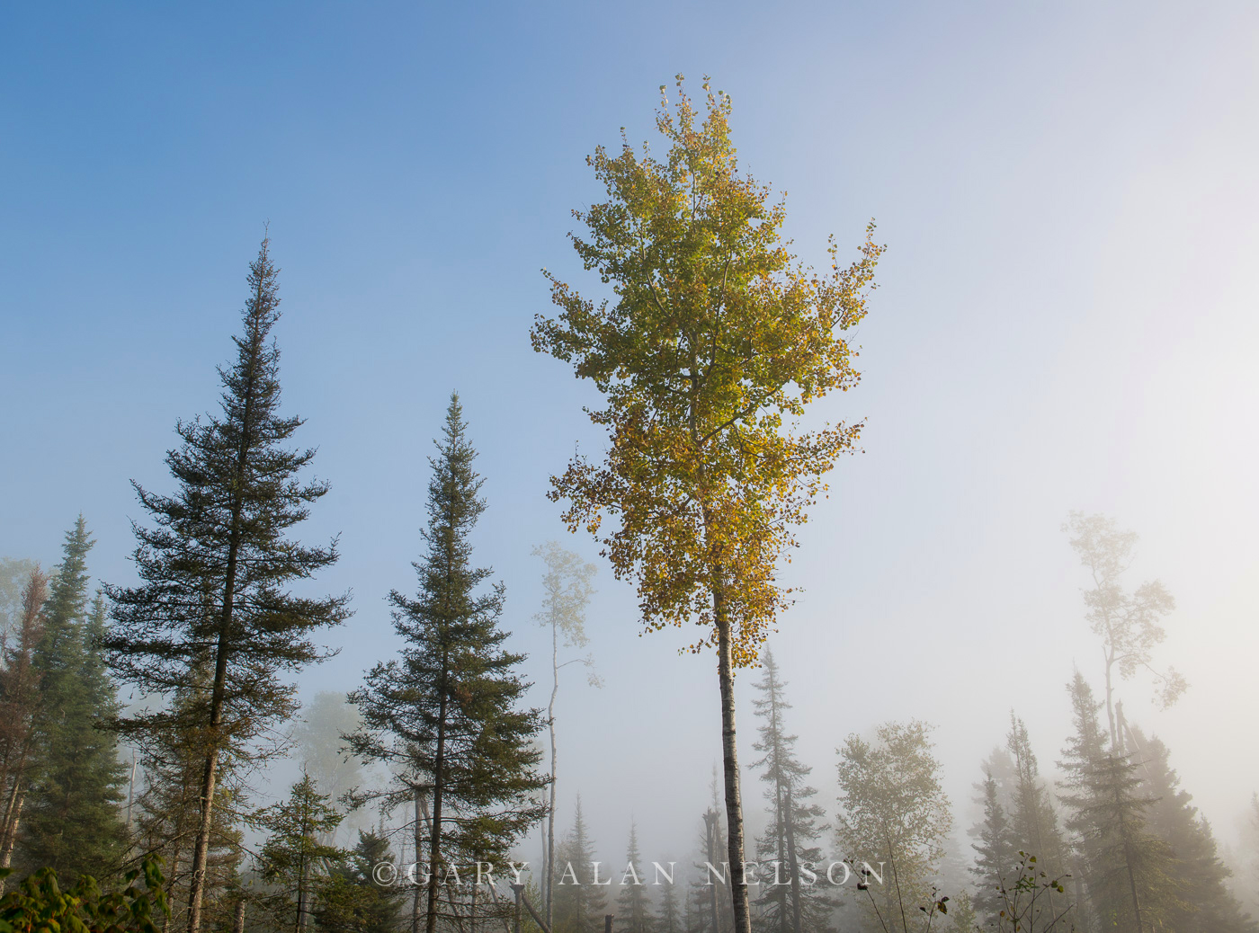 Superior National Forest,autumn,fog, photo