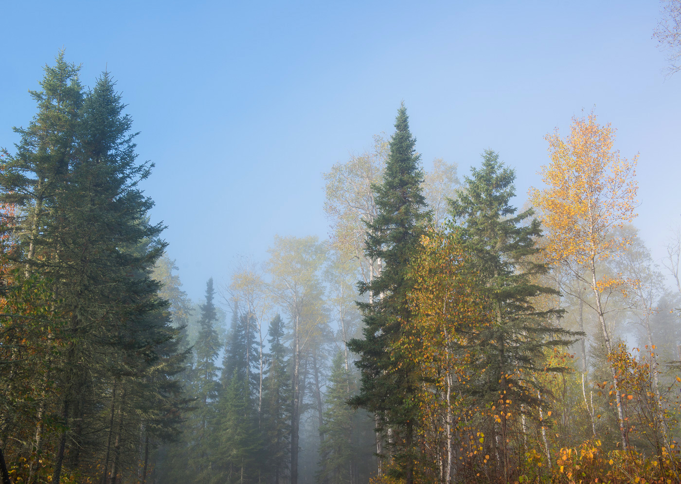 Fog over Superior National Forest in autumn, Minnesota