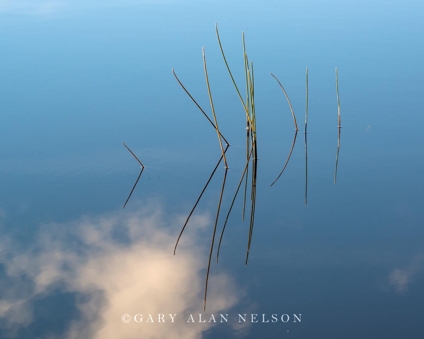 Superior National Forest,blue,bulrushes,lake,reflections, photo