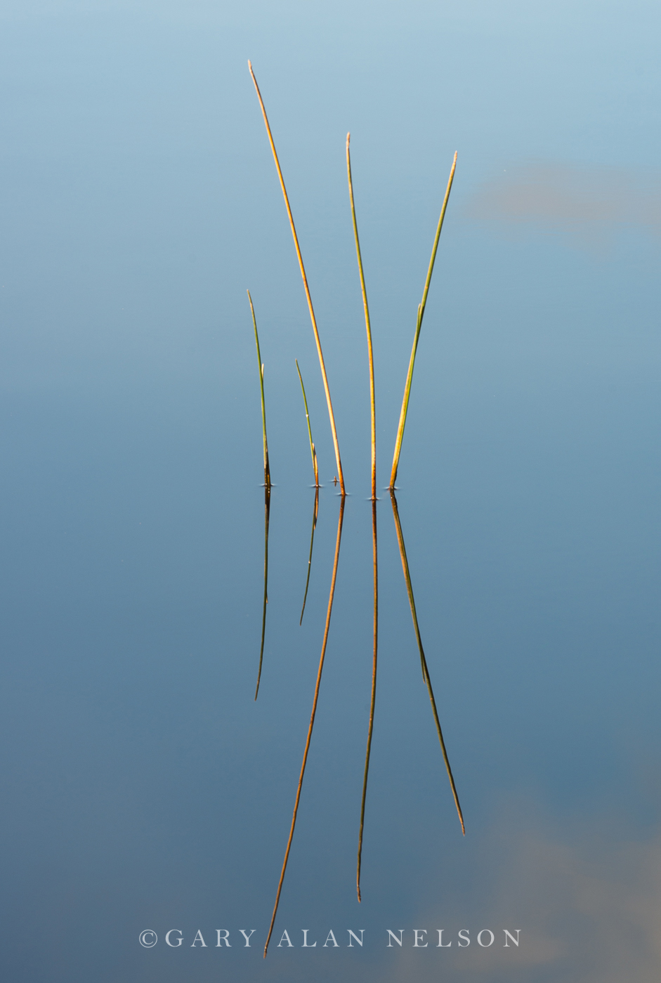 Superior National Forest,blue,bulrushes,lake,reflections, photo
