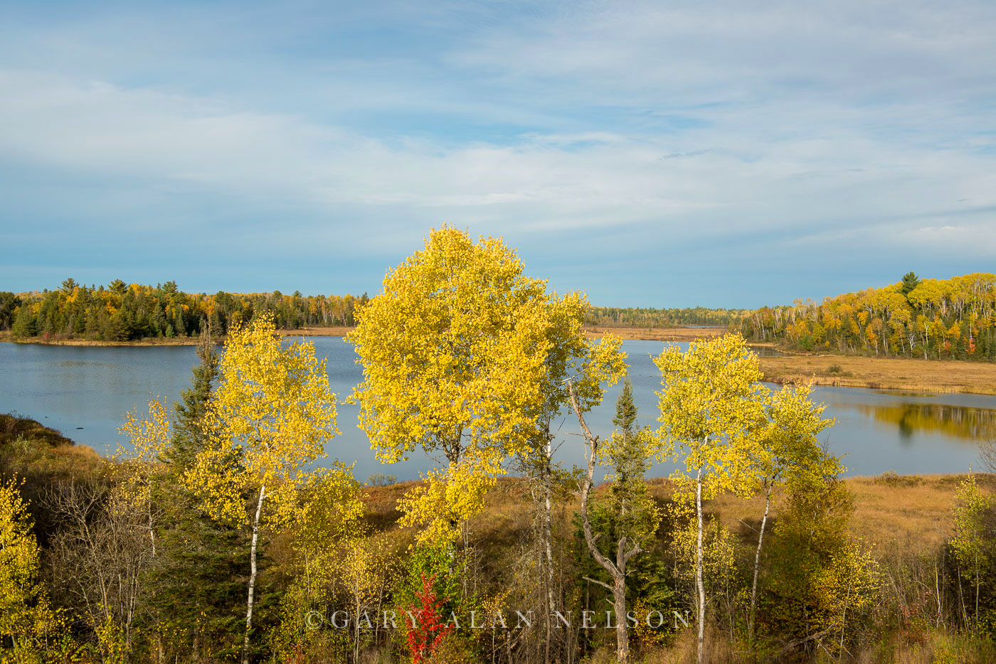 Turning Aspens on the shore of Slate Lake, Superior National Forest, Minnesota