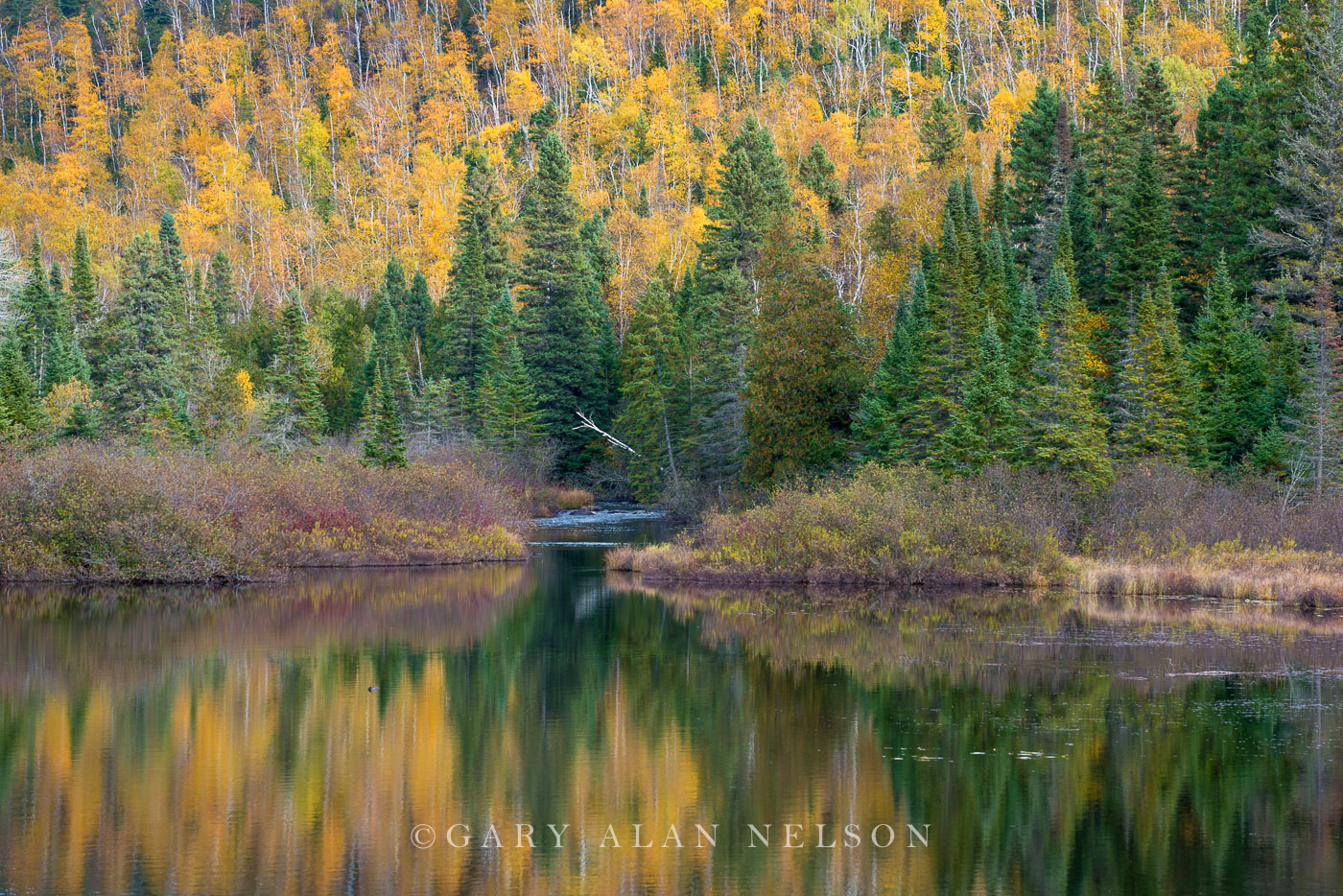 Forest,autumn,minnesota,state park, photo