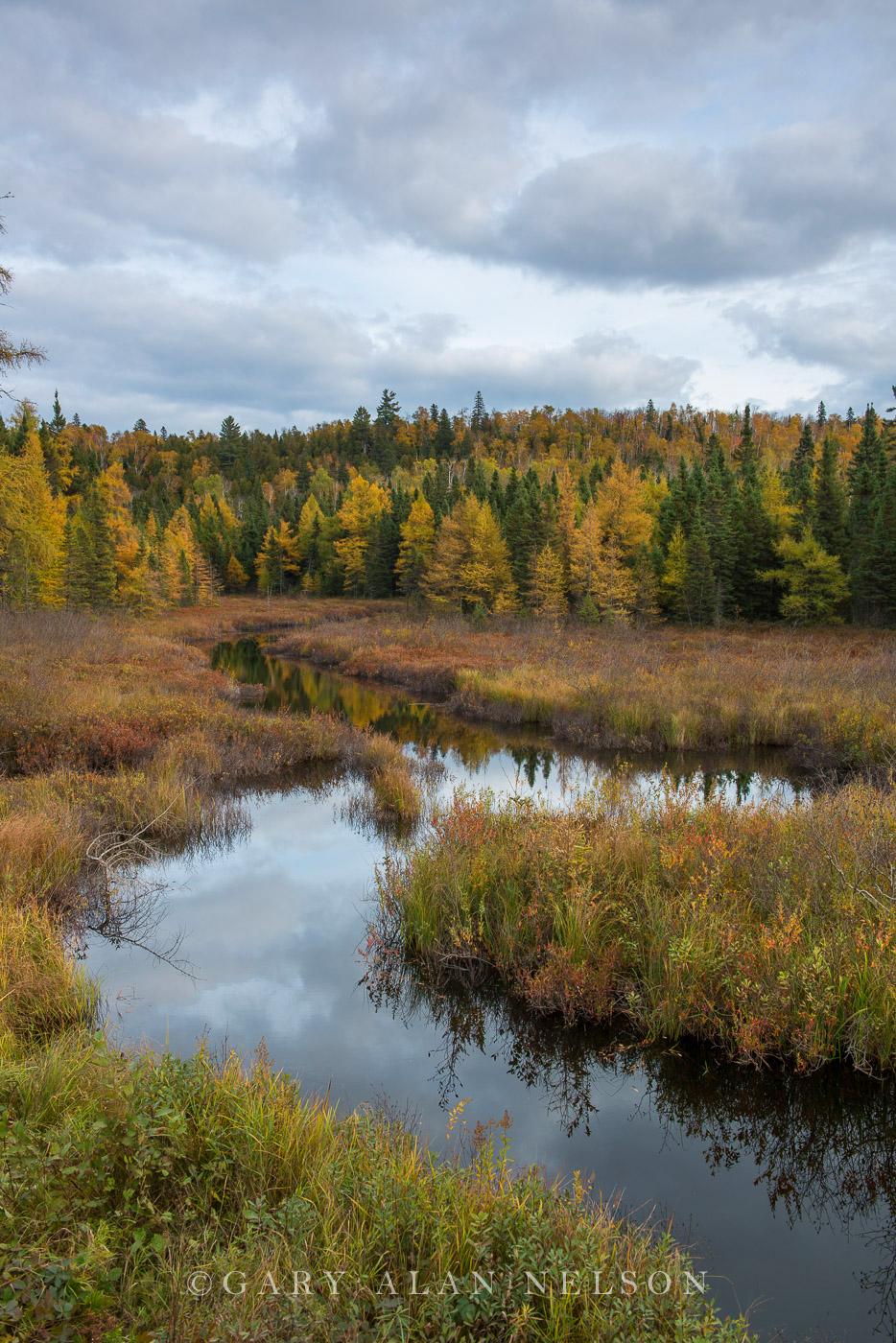 Forest,autumn,minnesota,state park, photo