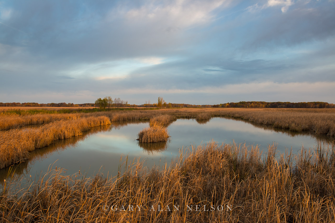 Carlos Avery,cattail marsh,minnesota,wildlife management area, photo