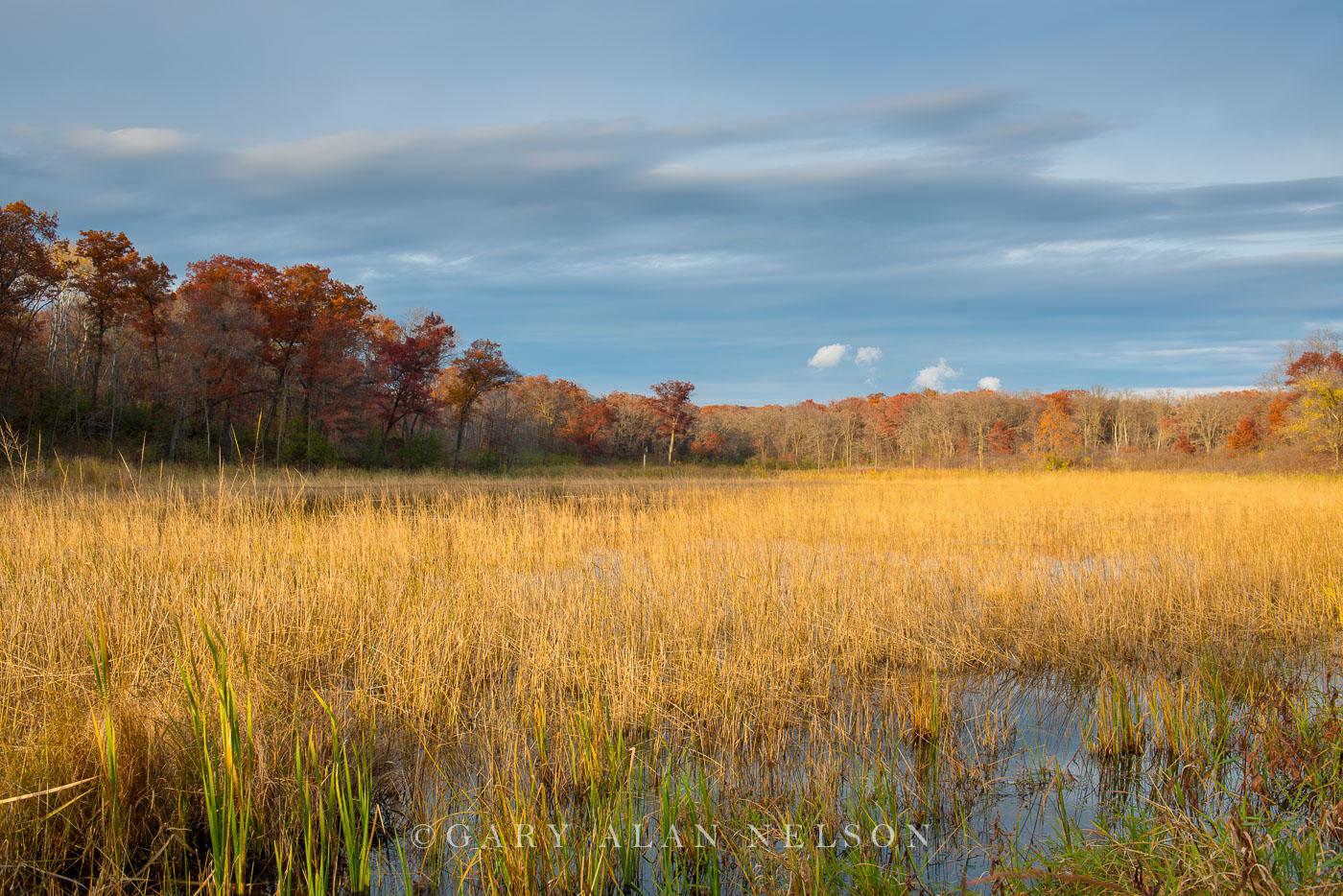Lake Maria,autumn,lake maria state park,minnesota,oak,oak forest,state park, photo