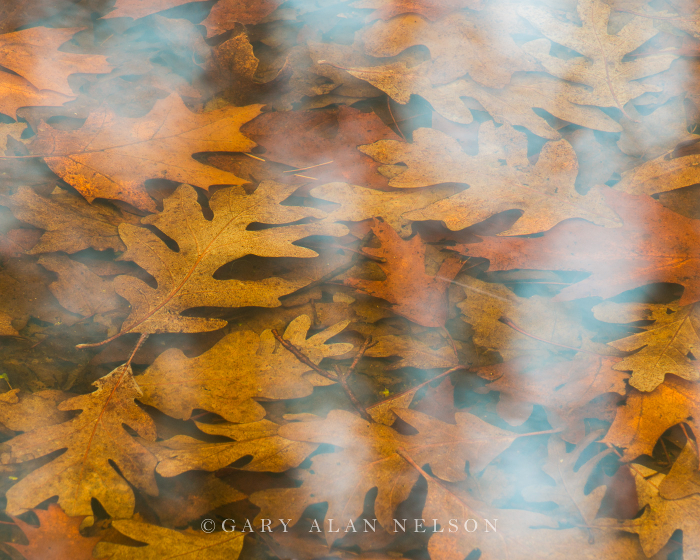 allemensratt,minnesota,oak,oak leaf,reflections,water, photo