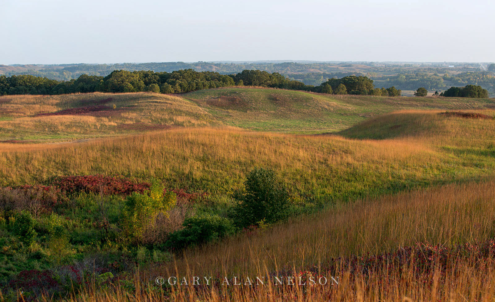 Glacial moraine and prairie grasses at the Nature Conservancy's Ordway Prairie, south central Minnesota