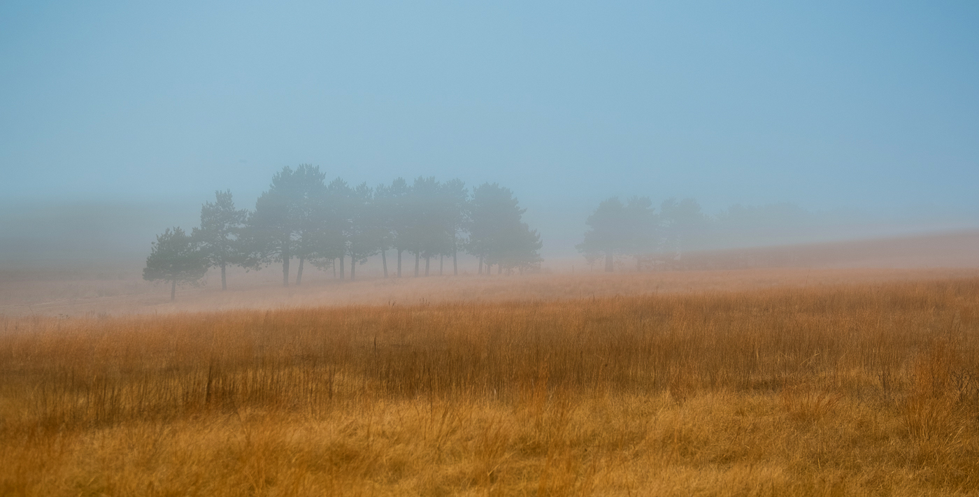 fog, minnesota, prairie, state park, photo