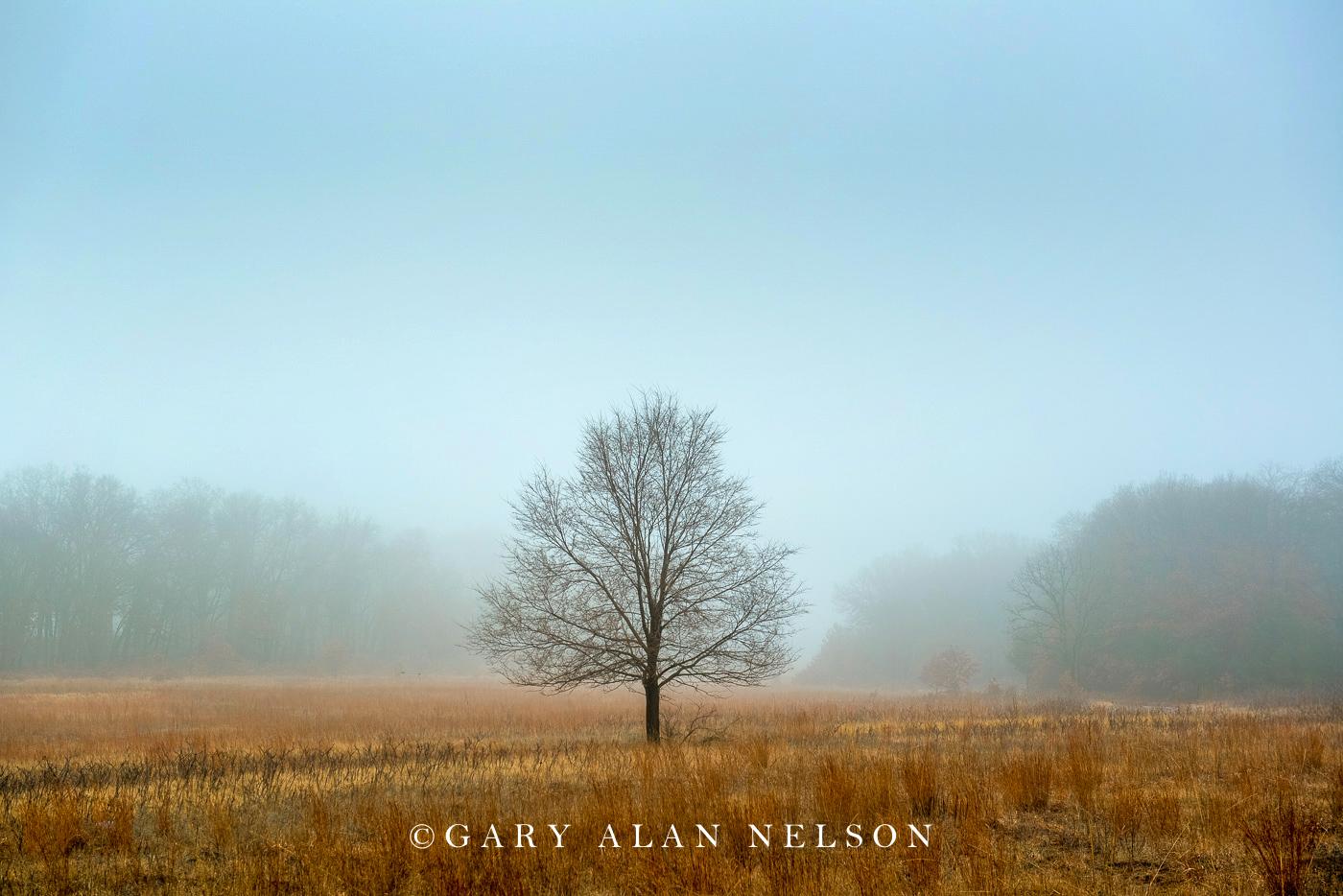 Prairie and oak in the fog, Wild River State Park, Minnesota