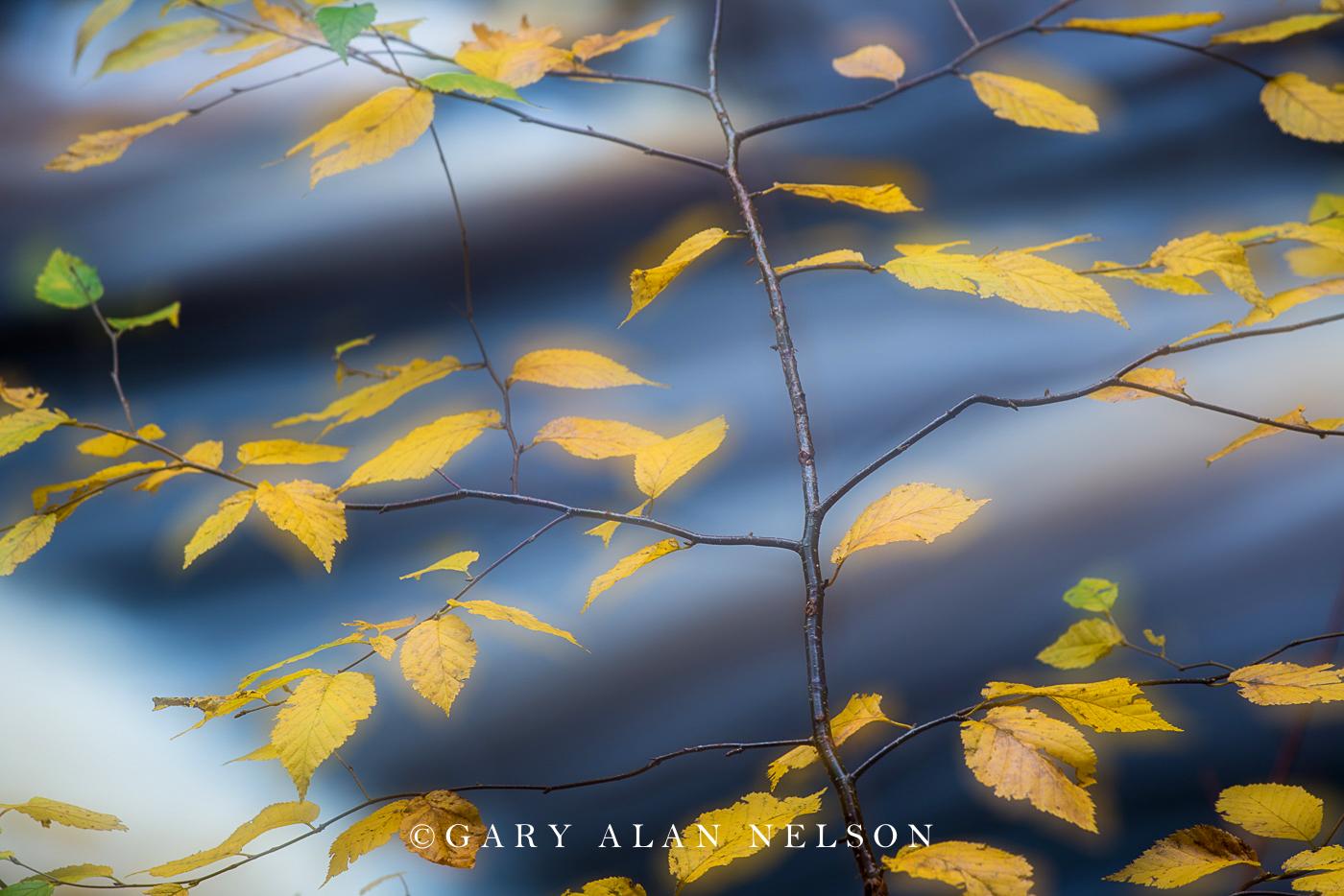 autumn, cascade river, minnesota, state park, photo