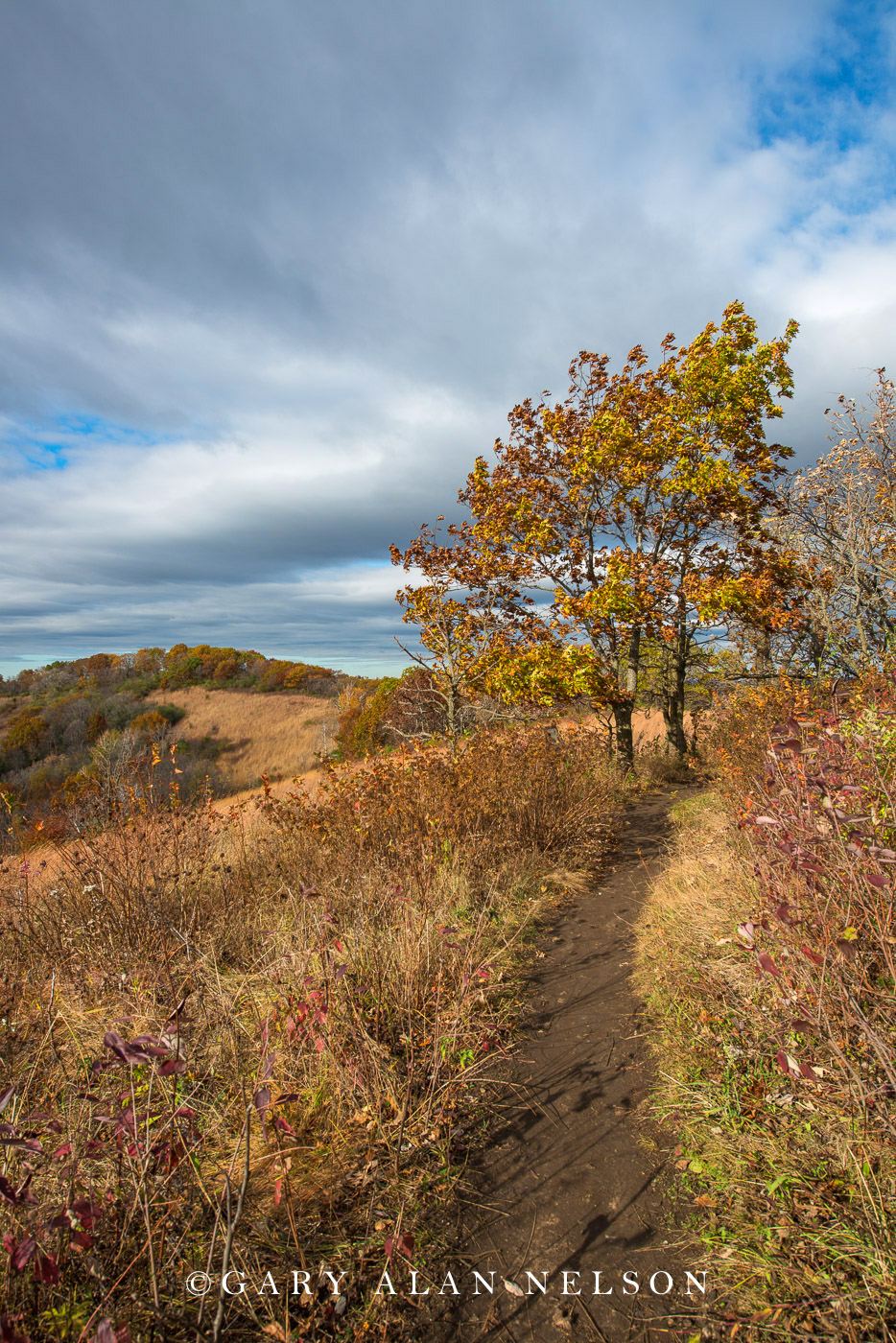 Mississippi River, autumn, goat prairie, great river bluffs, prairie, state park, photo