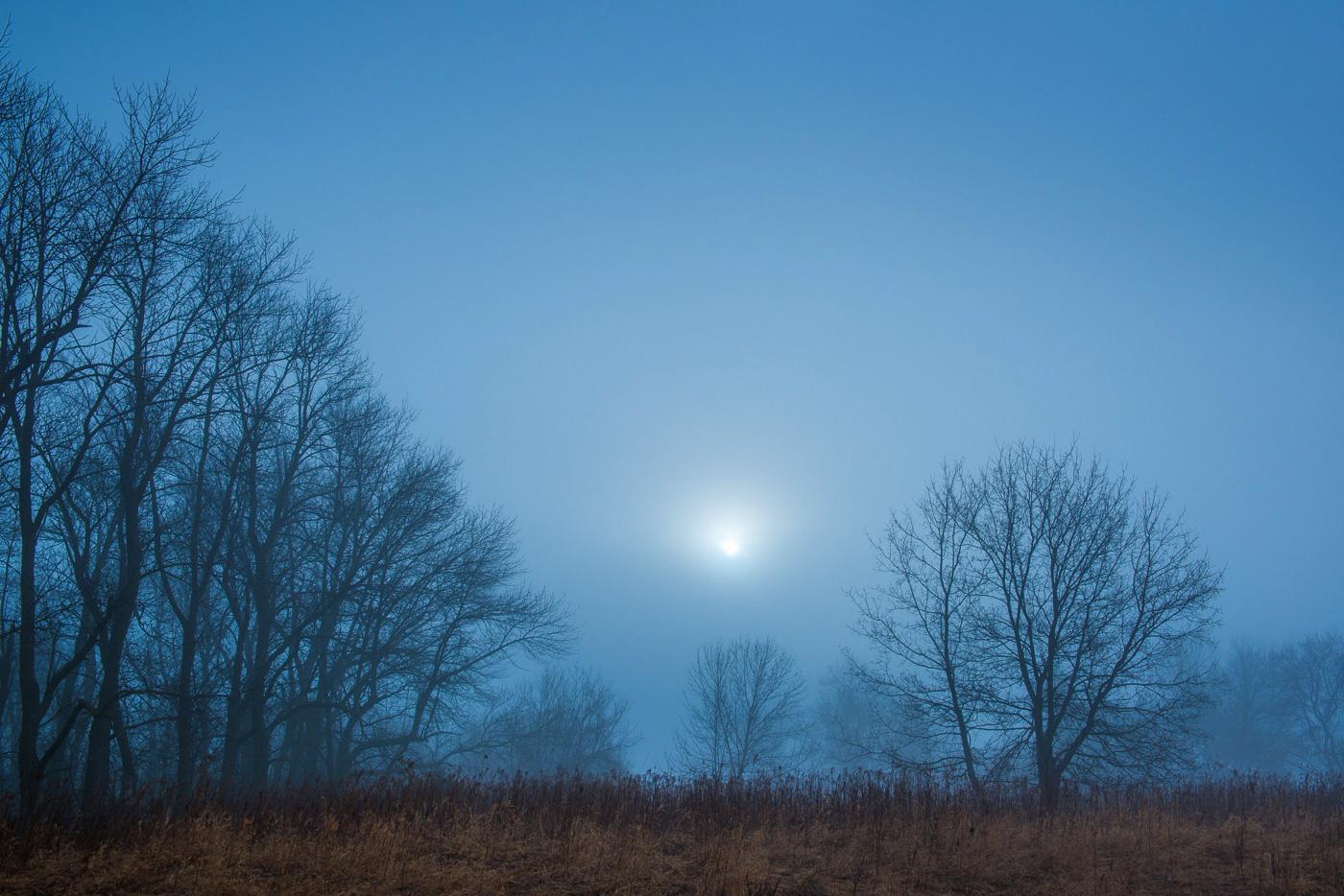 Rising sun in fog and bare trees, Allemansratt Park, Lindstrom, Minnesota