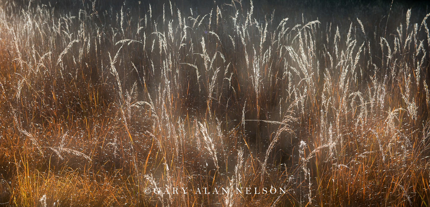 Sibley state park, autumn, minnesota, prairie grass, prairie., state park, photo