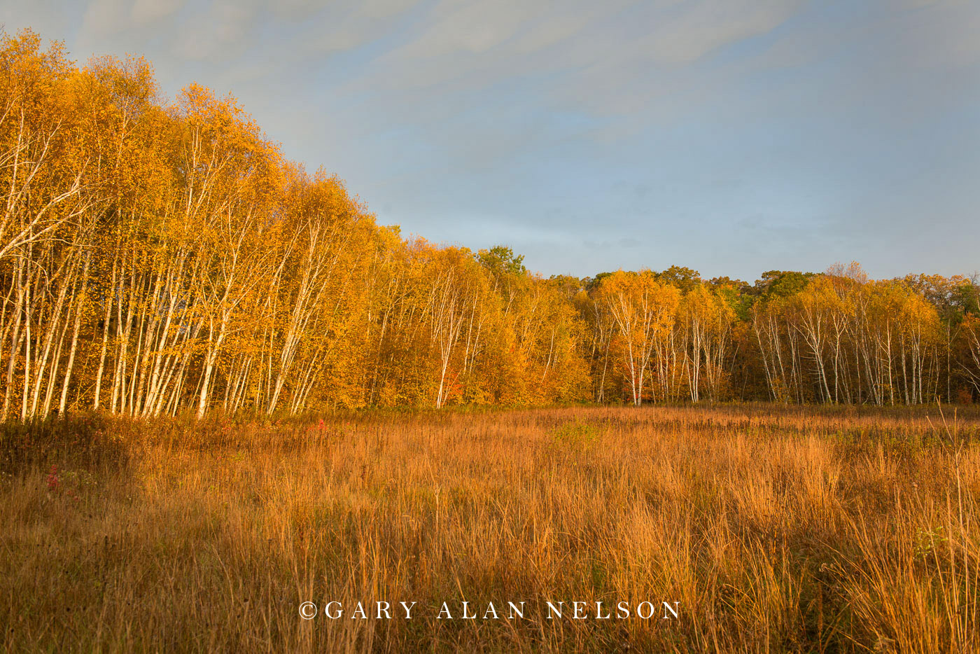 Woods and prairie in autumn near the St. Croix River, Wild River State Park, Minnesota