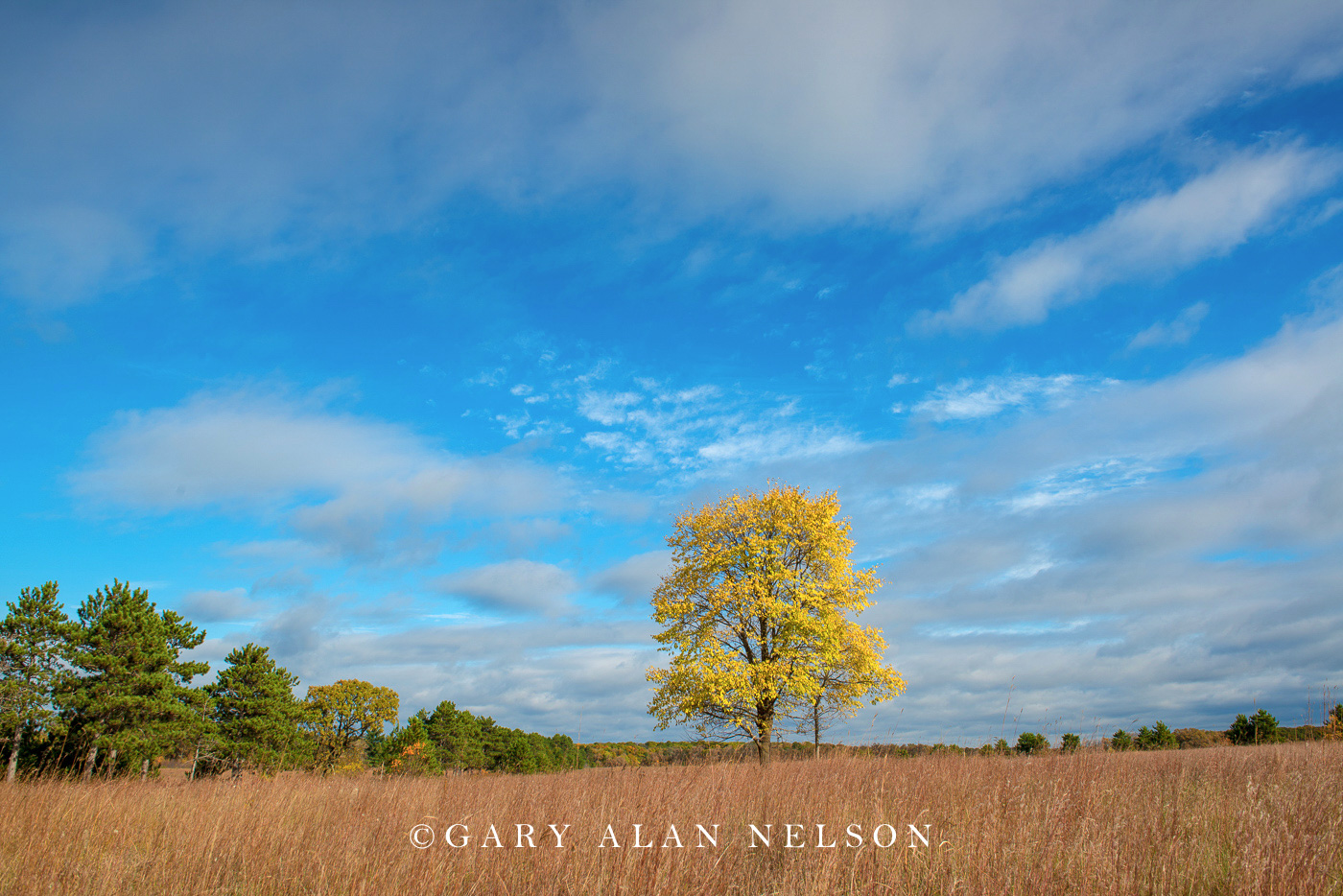 Lone tree on the prairie, Wild River State Park, St. Croix River Valley, Minnesota