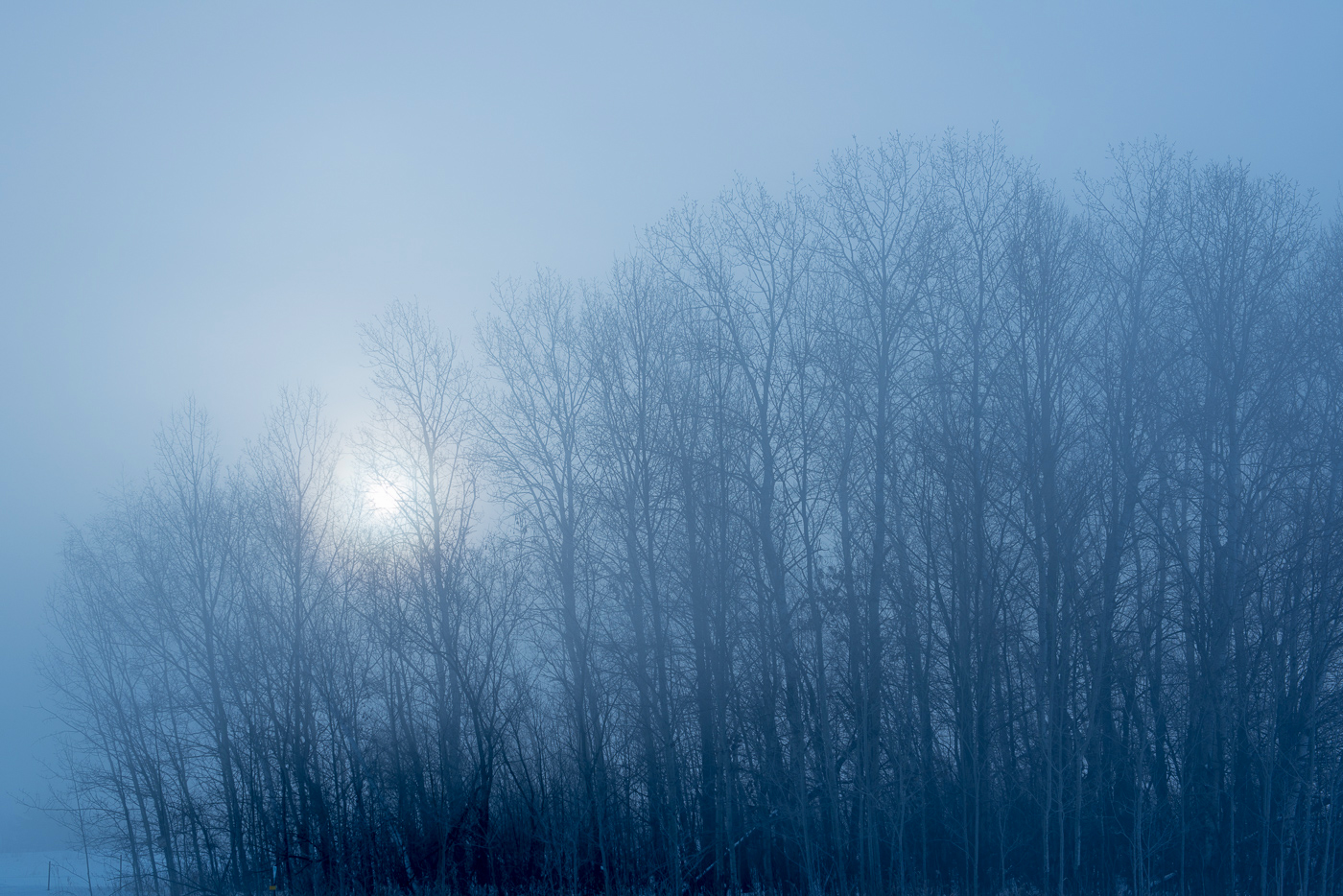 Fog and rising sun over forest, Chisago County, Minnesota