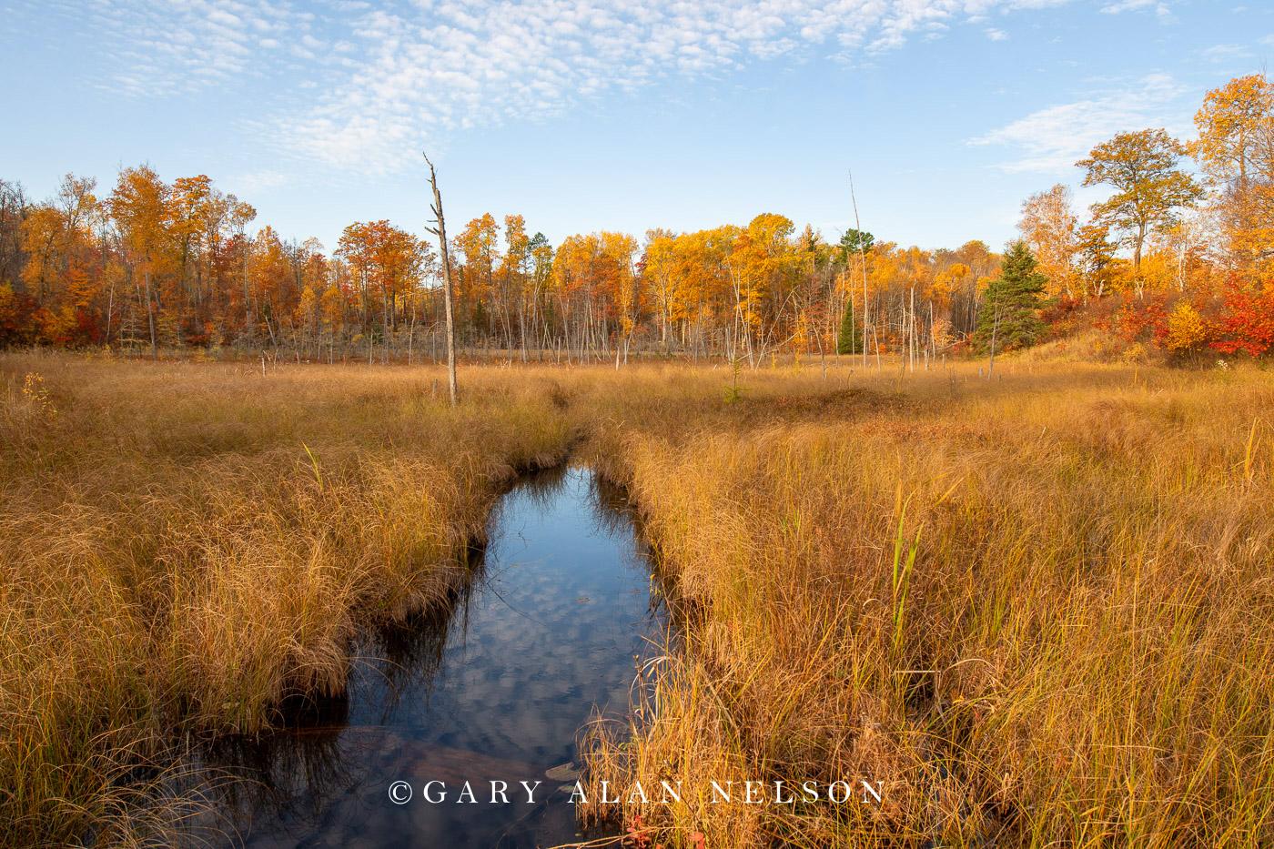 Autumn colors around a beaver pond, Savannah Portage State Park, Minnesota