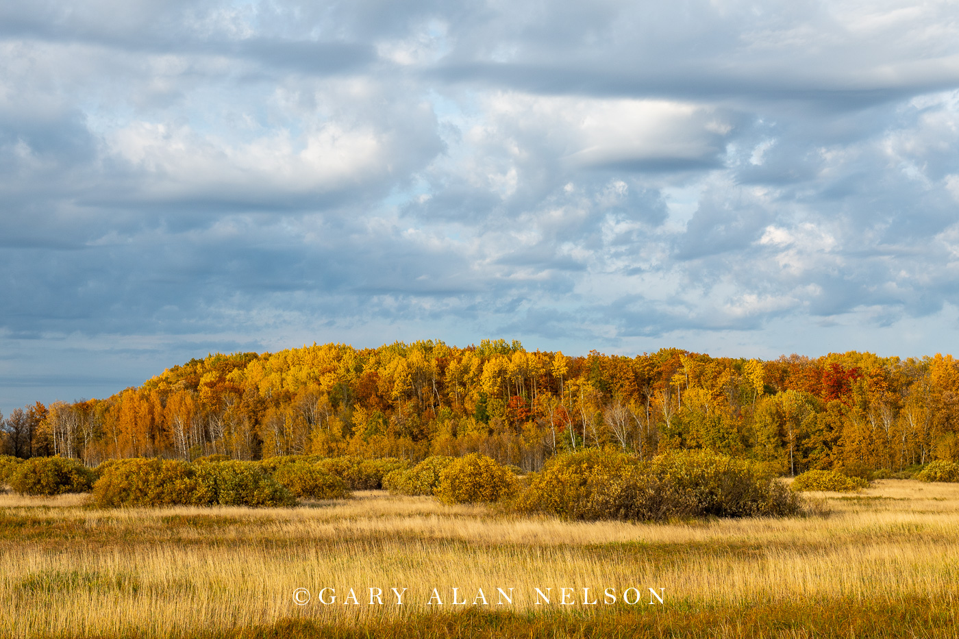 Autumn colors in Golden Anniversary State Forest, Minnesota