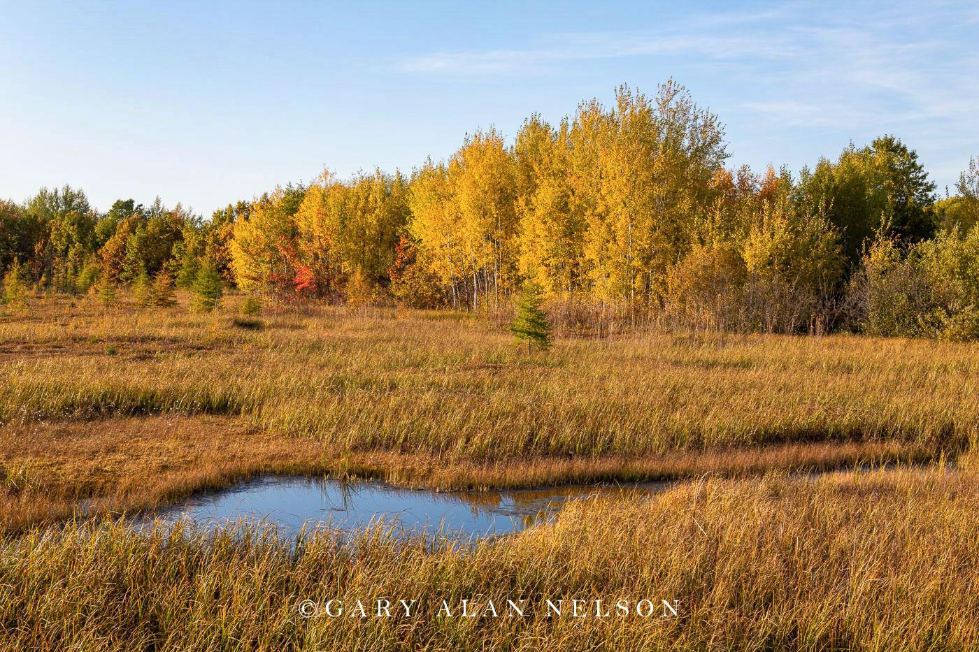 Creek and marsh in autumn, Rice Lake National Wildlife Area, Minnesota