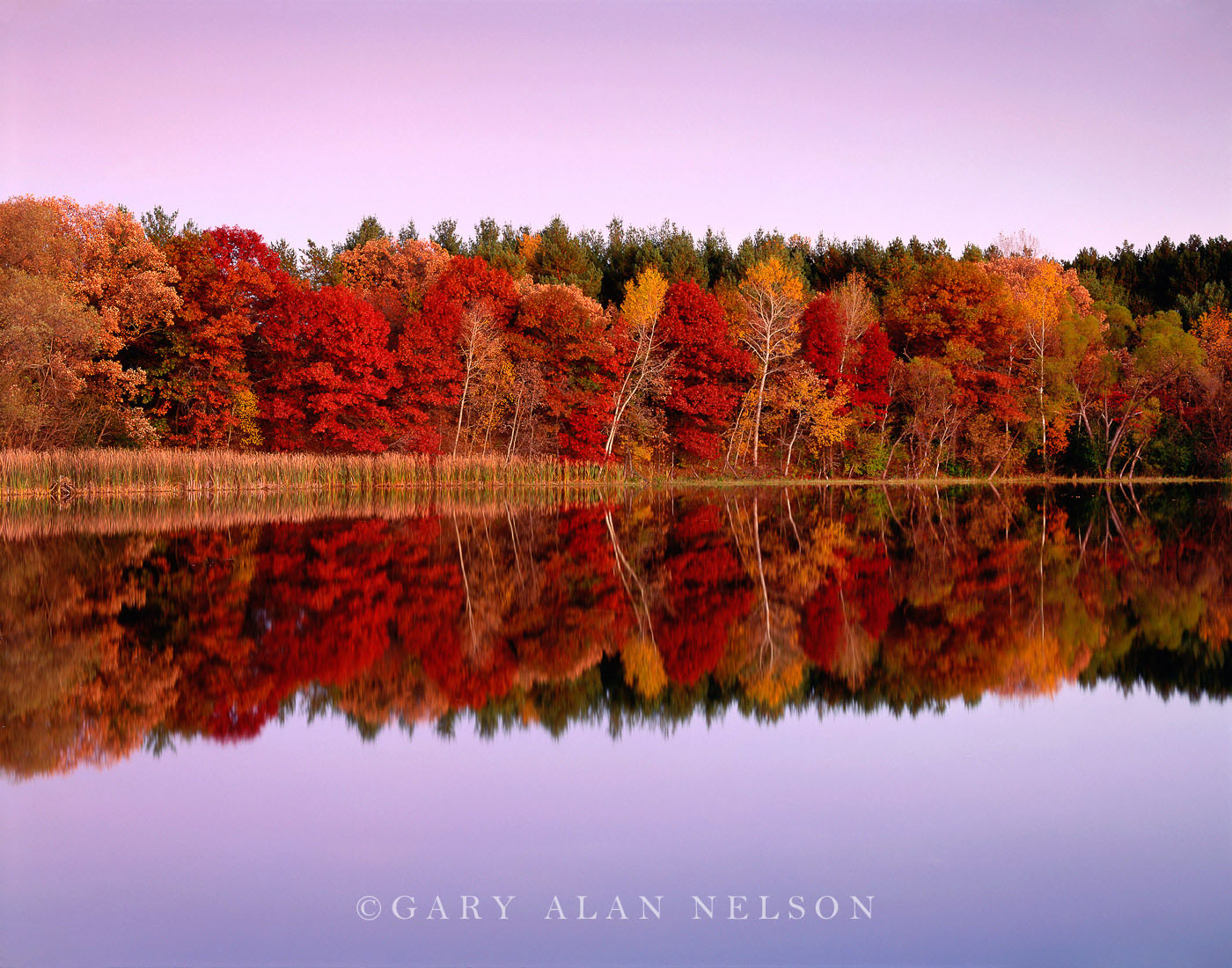 minnesota, twilight, autumn, reflections, pond, photo