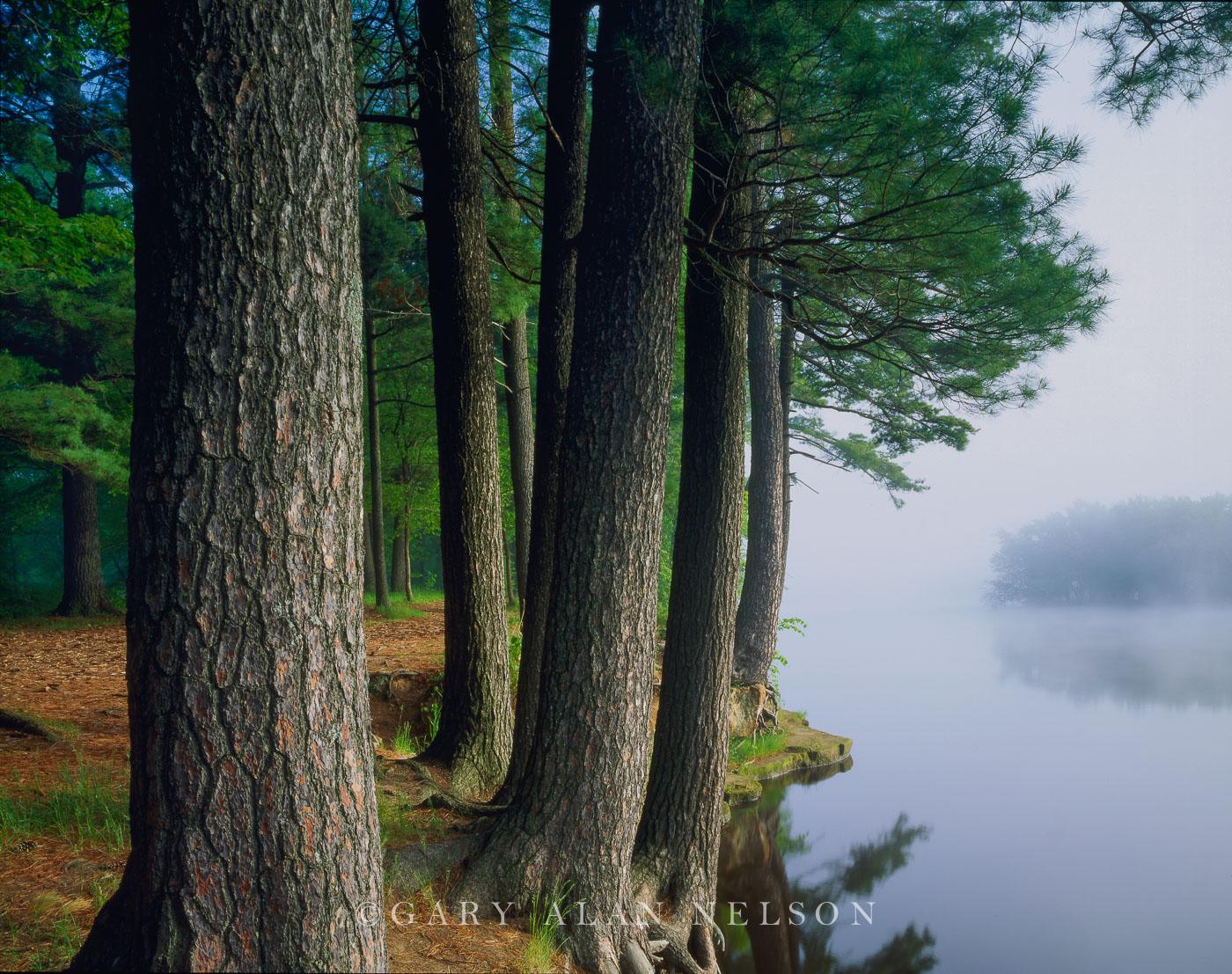 st, croix river, river, white pines, fog, state park, photo