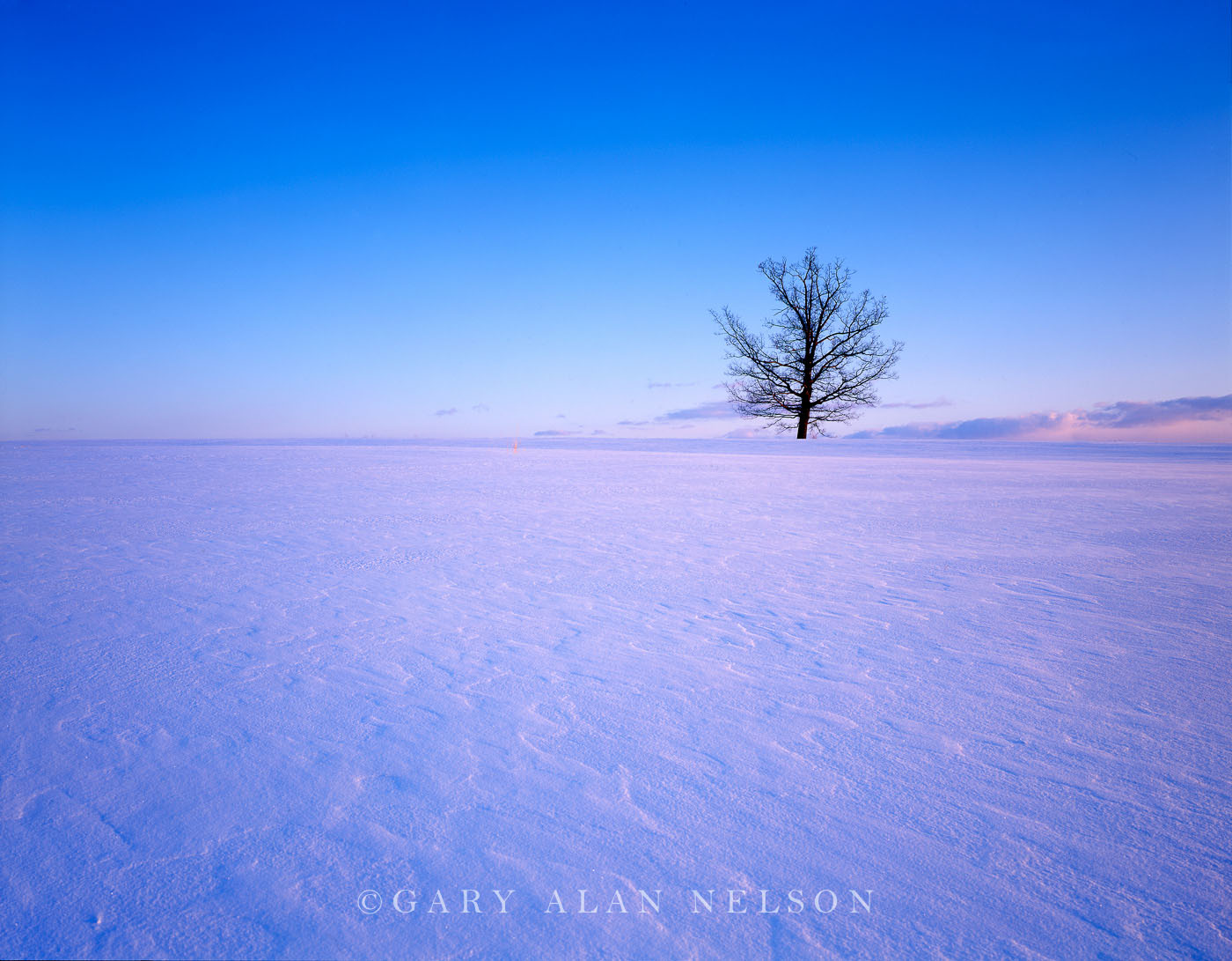 MN-94-10-SC Oak tree in a state of nature, on a frozen and windblown prairie central Minnesota