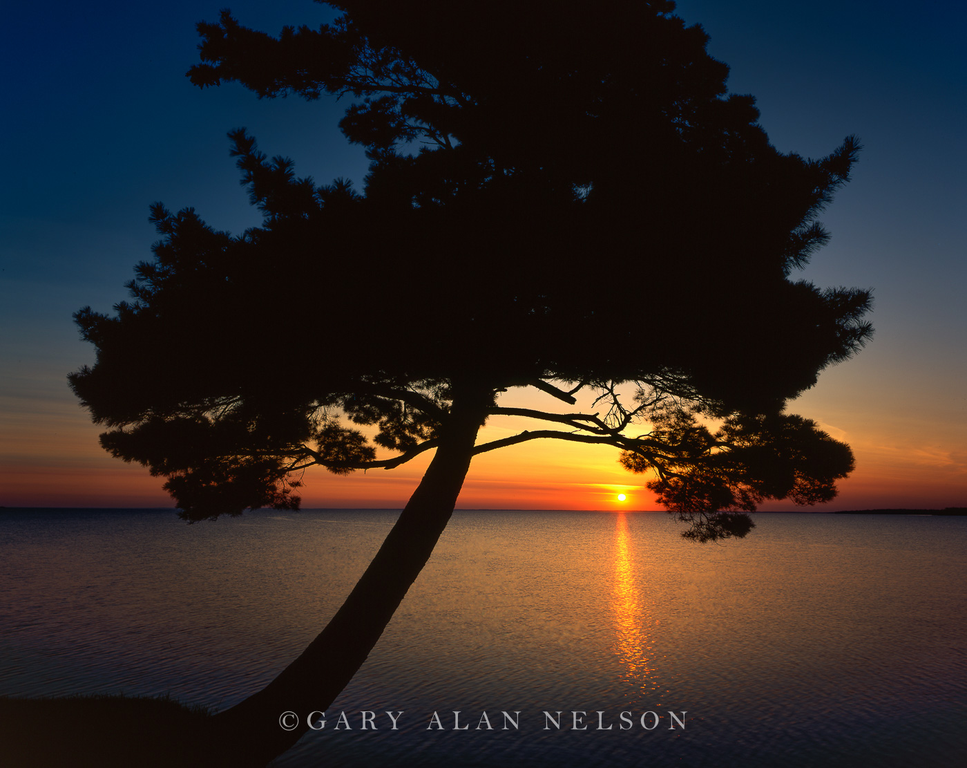 minnesota,silhouette,dawn, mille lacs lake, lake, pine, photo