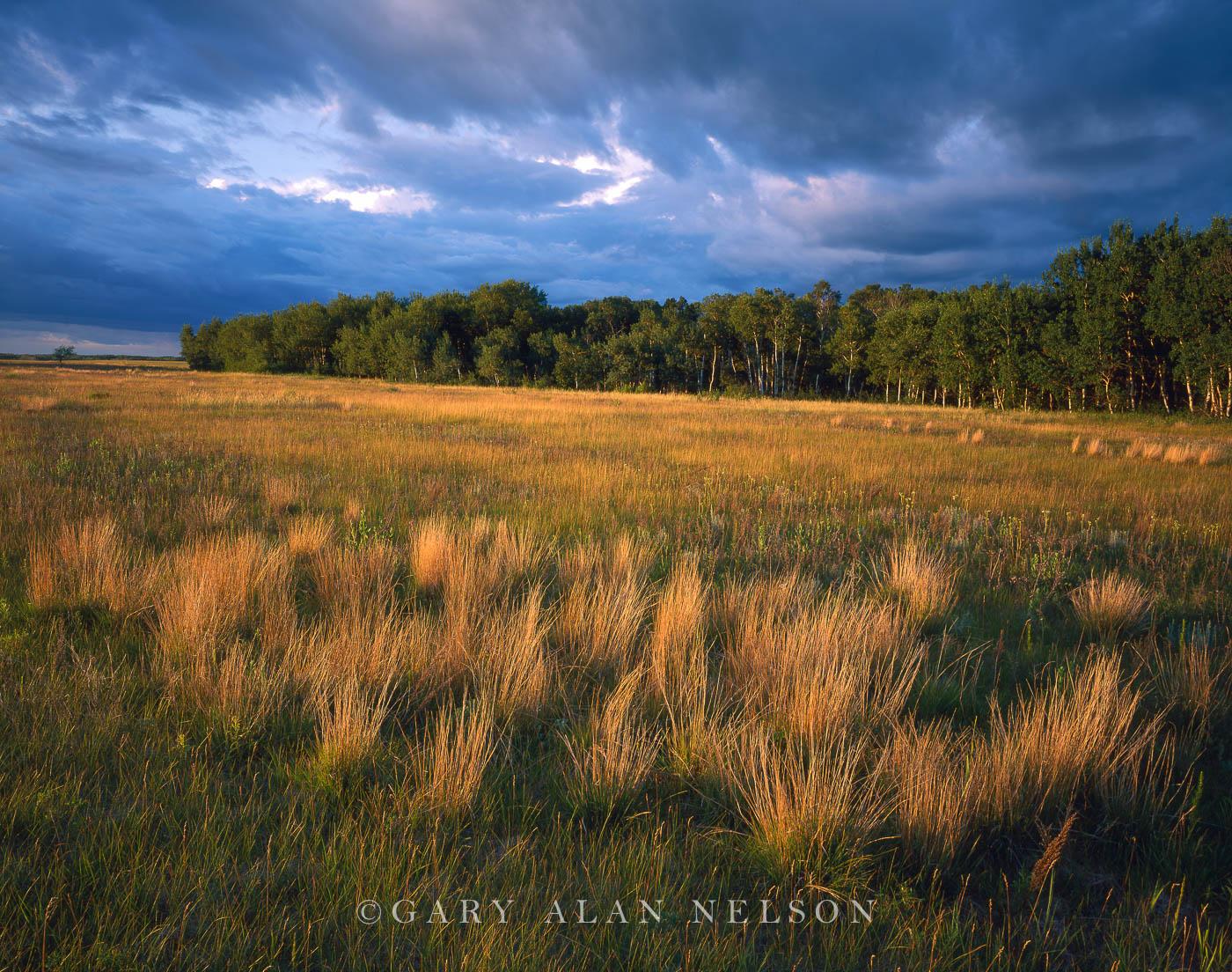 little bluestem, state park, minnesota, photo
