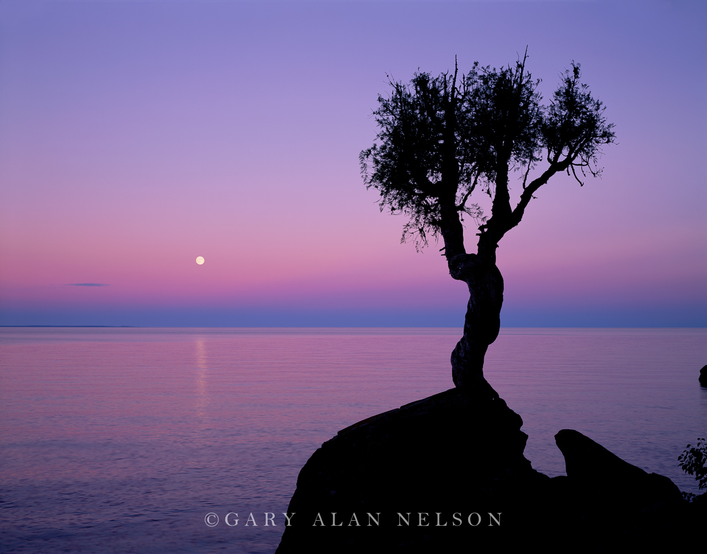 Spirit Little Tree, Full Moon, Lake Superior, Minnesota