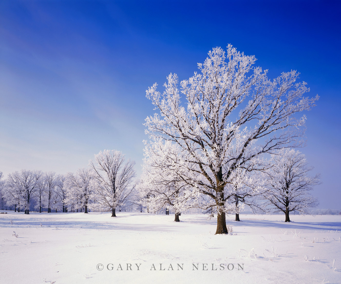 hoar frost, oak savannah, minnesota, photo