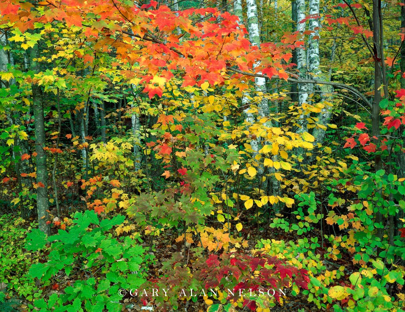 state park, minnesota, autumn colors, photo