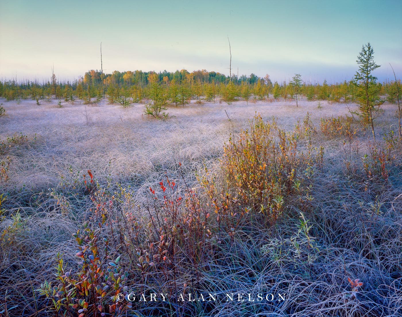 state forest, minnesota, peat bog, frost, photo