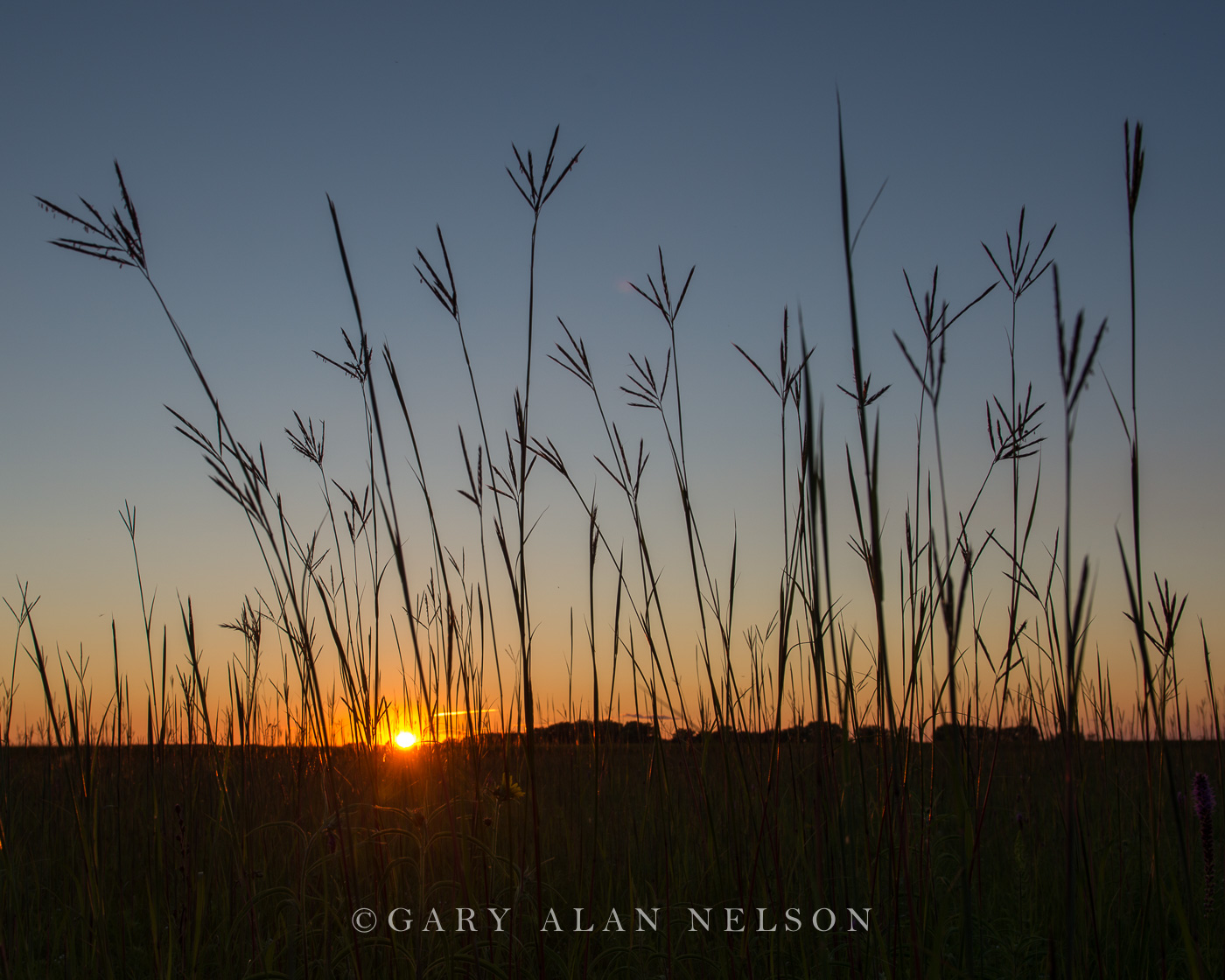 big bluestem, minnesota, prairie, photo