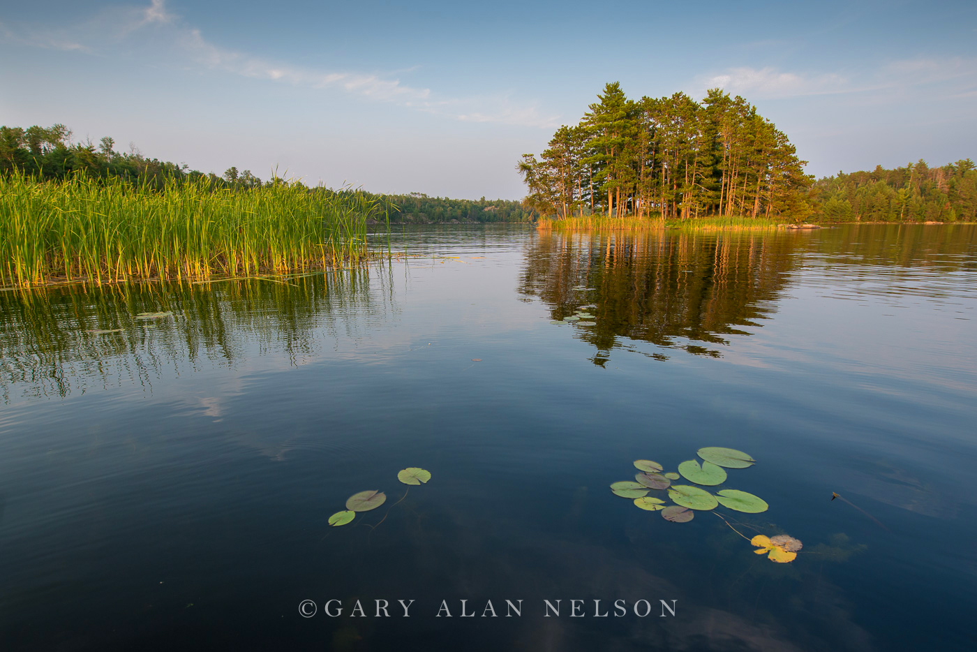 minnesota, voyageurs national park, lily pads, photo
