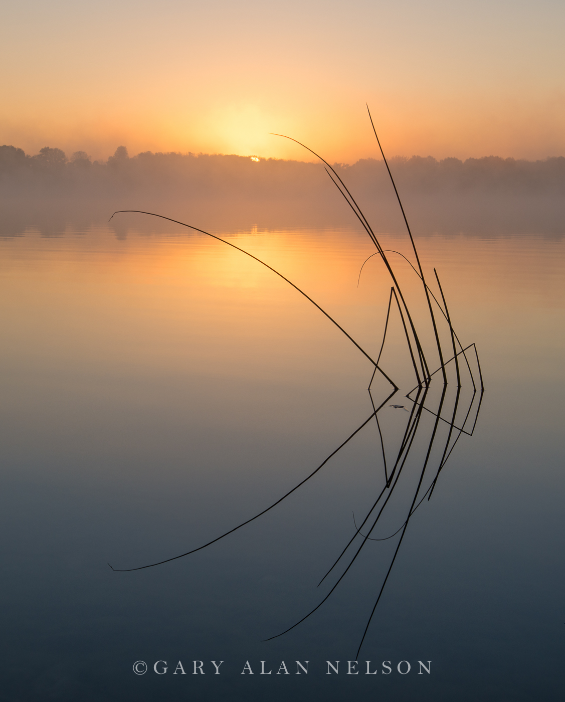 Rising sun over Lake Mary and bulrushes, Minnesota