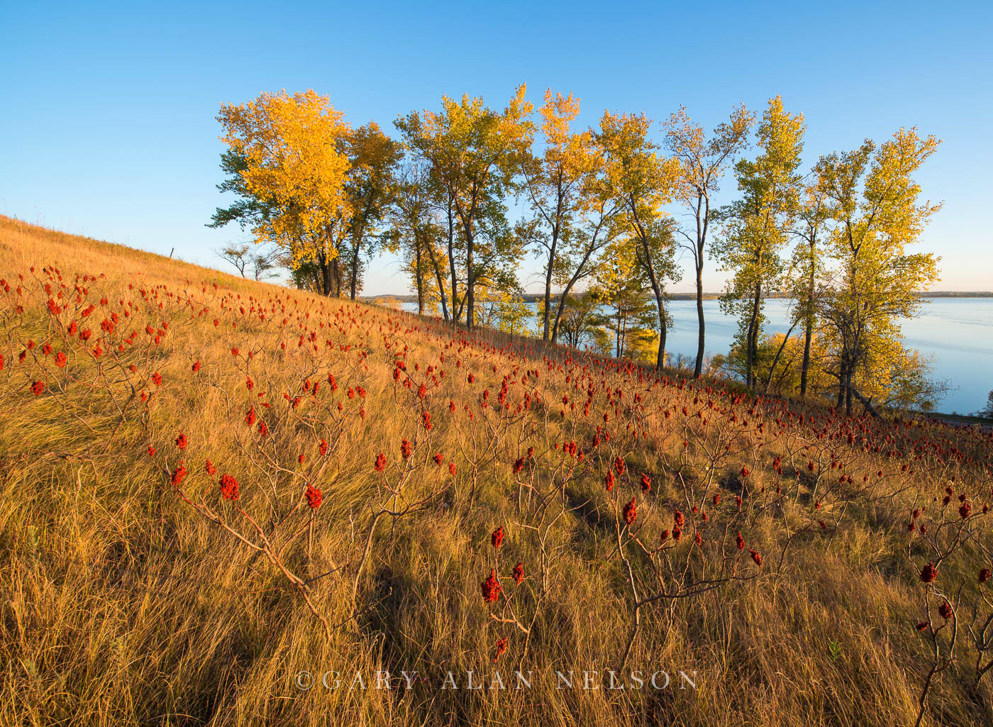 sumac, minnesota, prairie, lake Christina, the nature conservancy, photo