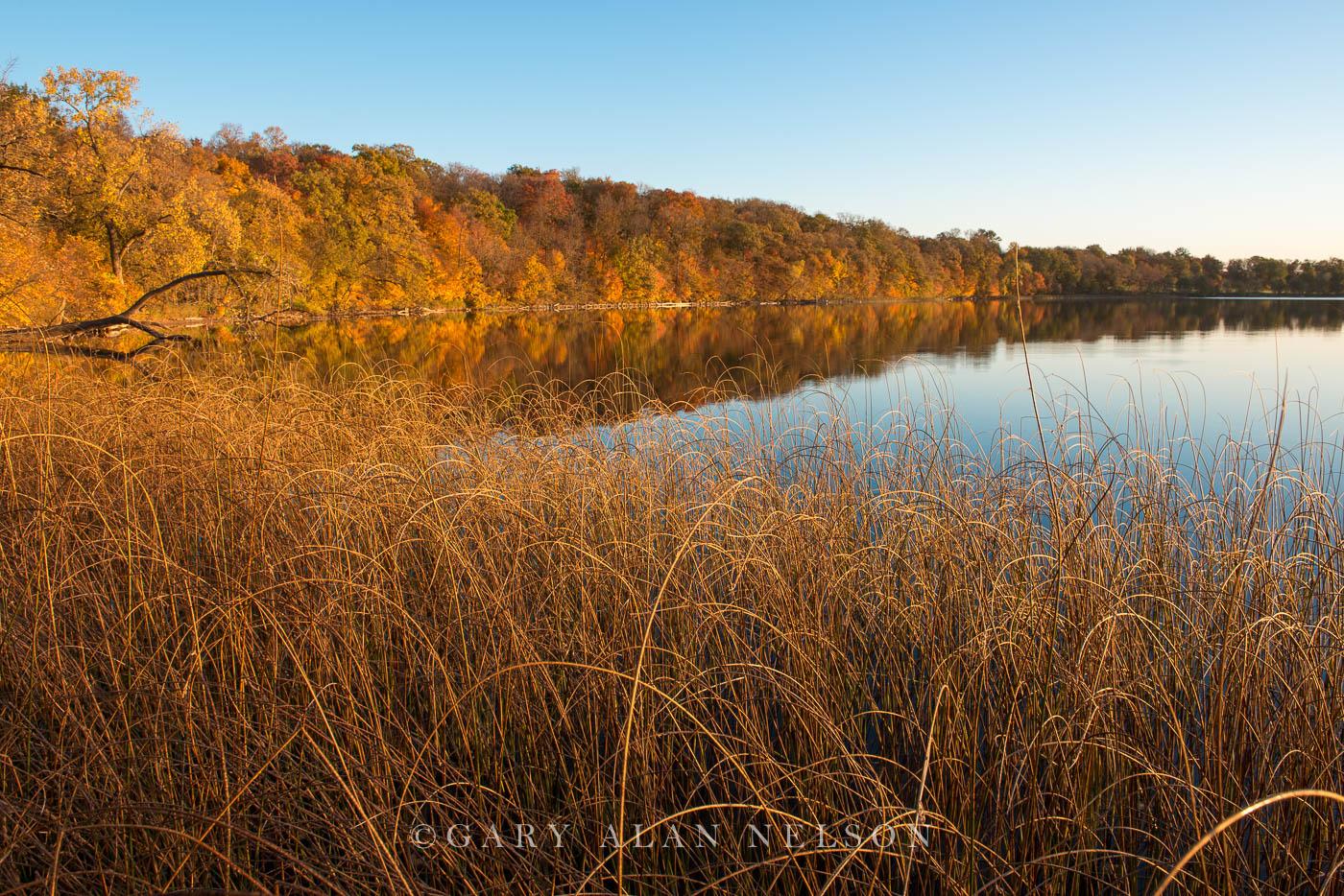 bulrushes, minnesota, round lake, autumn, photo