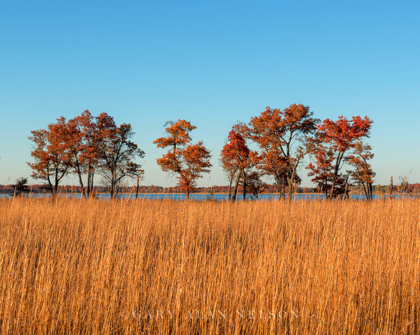minnesota, oak trees, cedar creek natural area,prairie, photo