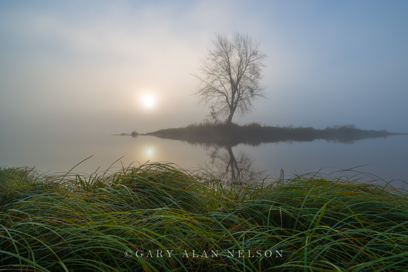 st. croix river, minnesota, island, lone tree, wisconsin, grasses, photo