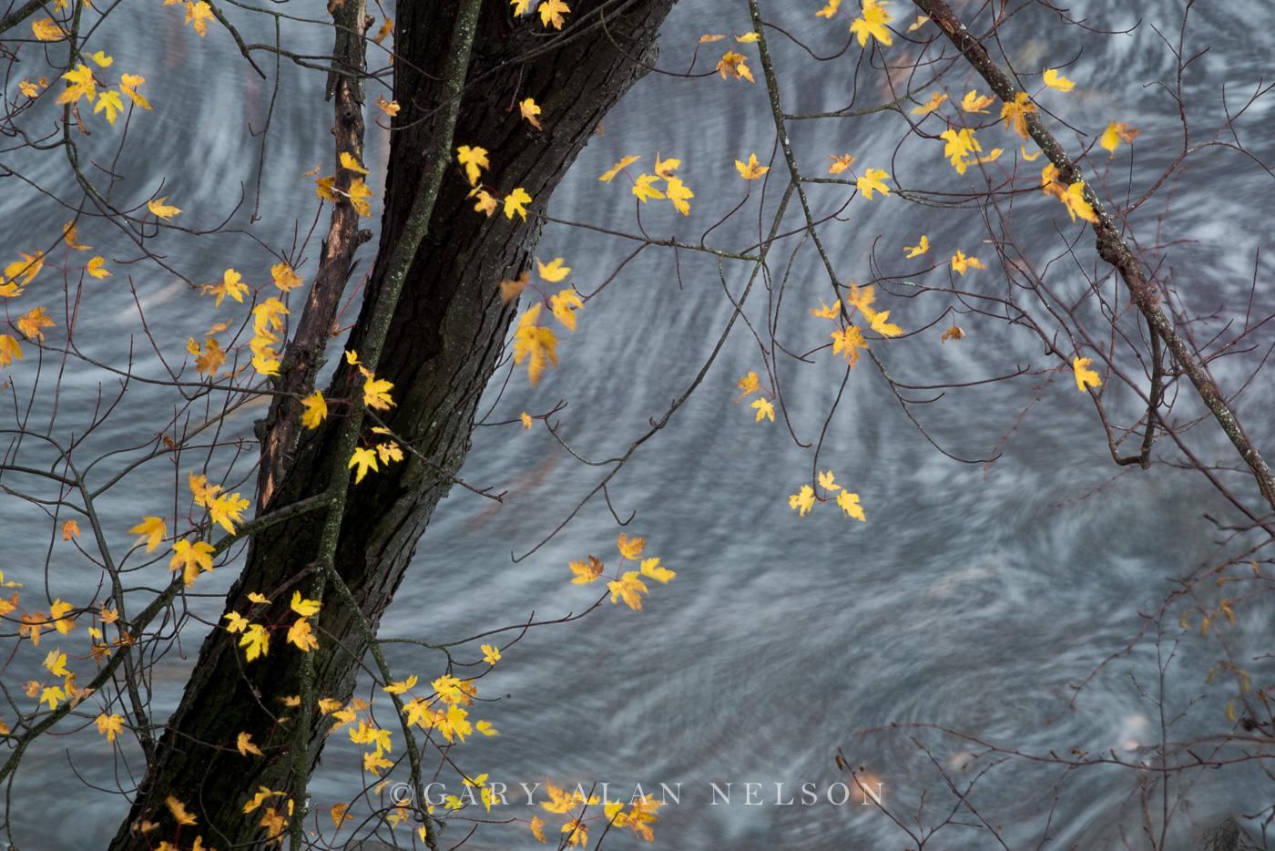 autumn, minnesota, st.croix river, national scenic river, wisconsin, photo