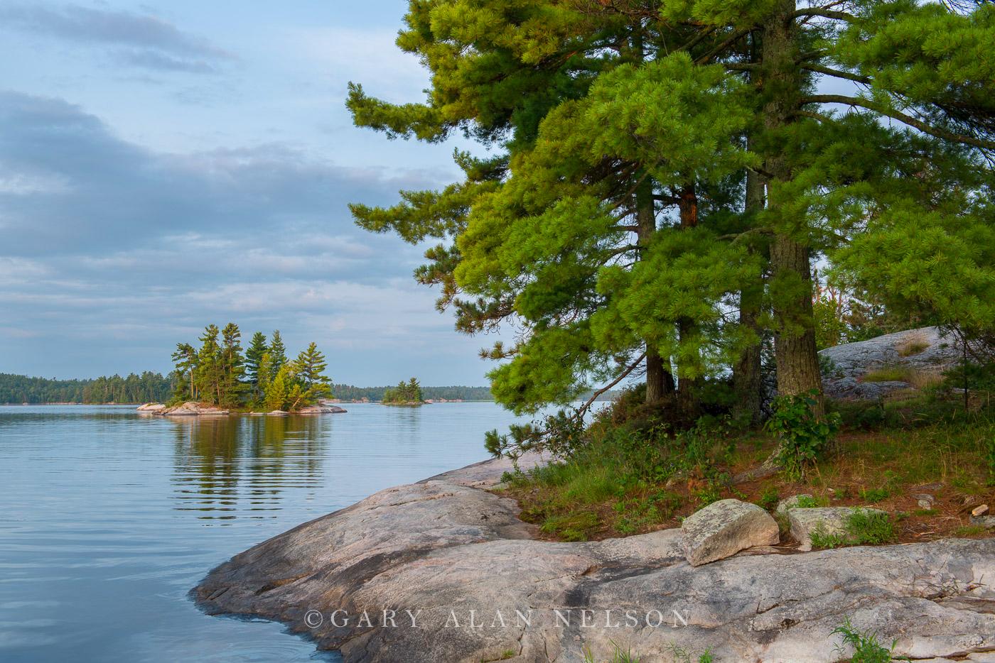minnesota, voyageurs national park, island, white pines, photo