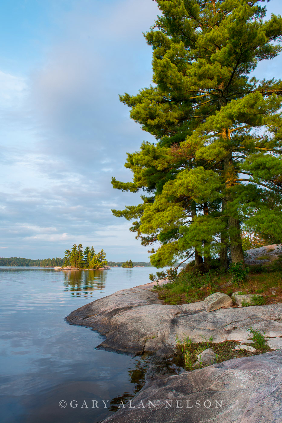 minnesota, voyageurs national park, island, white pines, photo